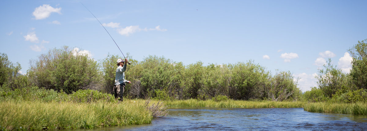A fly fishing guide casts to trout on Fish Creek, Wyoming.