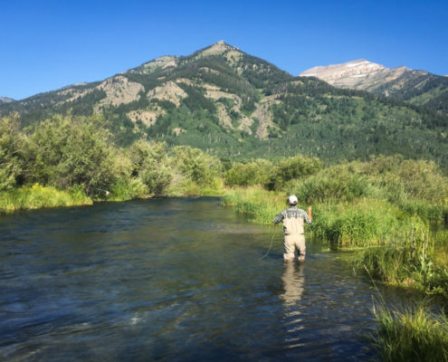Man fly fishes on a creek in Jackson Wyoming