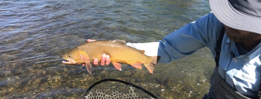 cutthroat trout in Jackson Hole